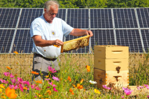 Mike Kiernan of Bee the Change inspects a honeybee hive, photo courtesy of Bee the Change